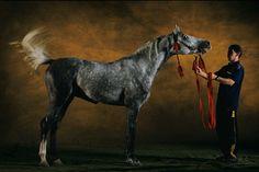 Terski horse, photo by Yann Arthus-Bertrand