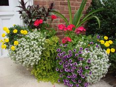 summer flower pots in full bloom.