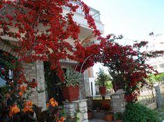Hotel Venetia in Ireon Samos, Plants, Places, Plant, Planets