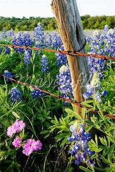 Country Living ~ I love wildflowers, especially blue bonnets.