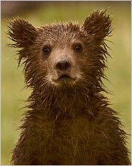 Black Bears.  Be afraid people.