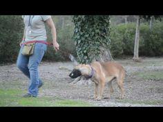Dora ist sehr lieb und menschenbezogen - http://www.tier-kleinanzeigen.com/ads/dora-ist-sehr-lieb-und-menschenbezogen/