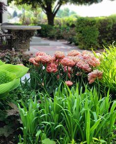 PINK PEONY WATERCOLOR: Virágok és növények, inspiráció akvareljeimhez #inspiration #flowers #greenery  #gardens