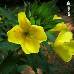 100seeds/bag Tuberose flower seeds balcony bonsai indoor plants cordate telosma Flower seeds #Affiliate