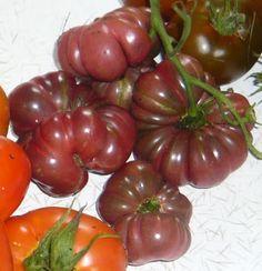 purple calabash tomato - Google Search