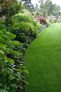 Sweeping curves in the lawn & planted borders Outdoor Gardens, Lawn Edging, Beautiful Gardens, Landscape Design, Lawn, Shade Garden, Outdoor, Dream Garden, Backyard Landscaping