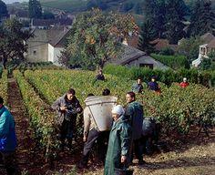 Santenay, France