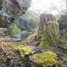Faerie #tolkien #moss #mood #nature #rocks #tree #forest #detail #green #hiddenplace #discover #leica #leicaq #fantasy #explore #wander #nemours #igersfrance