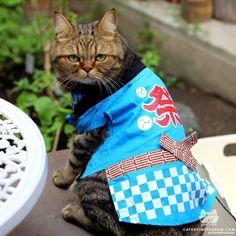 From @toorachanthecat: Its a festival! #catsofinstagram [source: http://ift.tt/2fOCZ0l ]