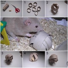 DIY Treat Toy. My mouse picks it up and runs away as fast as he can;despite the fact that it's the size of him X)