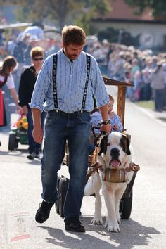 St Bernard Puppy, Popular Toys, Puppies, Animals, San Bernard Dog, Cubs, Animales, Animaux, Animal