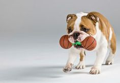 Dog Exercise: How to Exercise Your Dog Indoors