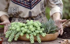 Aprenda a fazer um arranjo de plantas 'suculentas' lindas e resistentes ao sol.