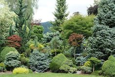 Backyard landscaping privacy trees small gardens new Ideas Evergreen Landscape, Evergreen Garden, Evergreen Shrubs, Conifer Trees, Trees And Shrubs, Garden Shrubs, Shade Garden, Lawn And Garden, Garden Beds