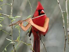 When you are so bored that you look up birds with arms