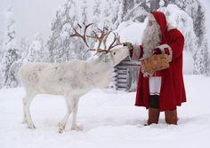 Santa Claus feeding reindeer at the top Ritavaara in Pello in Lapland