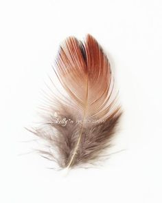 """The Floater""- Little red pheasant feather on white. Minimalist art. Fine Art Print. Professionally printed upon order. My photographs are professionally printed with archival inks on premium acid-fre"