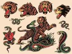 Art Print: Tigers & Snakes Authentic Tattoo Flash by Norman Collins, aka, Sailor Jerry by piddix : Sailor Jerry Tattoo Flash, Flash Tattoo, Tattoo Flash Sheet, Sailor Tattoos, Vintage Tattoos, Body Art Tattoos, Tattoo Drawings, Tattoo Illustrations, Bird Drawings