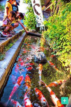 make your own pond! #Fish #garden #DIY #craft #home