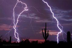 """Stuck in The Middle by Saguaro Pictures, via Flickr. """"This photo was taken on July 20, 2011 in Tucson, Arizona, US, using a Nikon D300S."""""""