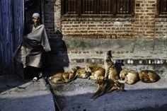 02071_10, Kashmir, 12/1998, KASHMIR-10207NF6. Sleeping dogs and a man. retouched_Sonny Fabbri 8/31/2015