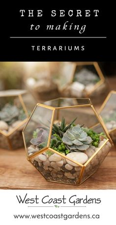 Make Your Own Succulent Terrarium | House + Home Tips | West Coast Gardens