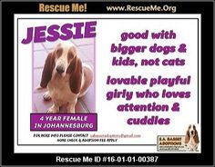 ― South Africa Dog Rescue ― ADOPTIONS ―RescueMe.Org Dogs And Kids, Big Dogs, Post Animal, Rescue Dogs, Cuddling, South Africa, Adoption, Shop, Physical Intimacy