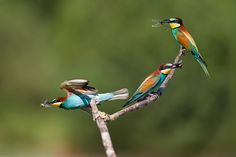 a small restaurant by Stefano Ronchi. Great timing on this photo.