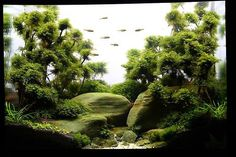 A nice tank posted by the Art of Aquarium