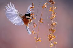 Perfect snapshot of a bird flapping wings