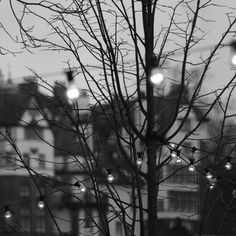 Christmas Lights, Ramsay Gardens, Edinburgh