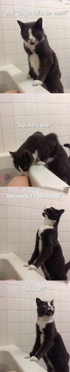 """oh dear stuuupid human... Have you not heard of the ultimately superior Cat cleansing technique? This water thing is disgusting!"""