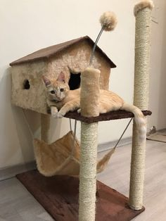 Dog Accesories, Cat Fountain, Diy Cat Tree, Cat Playground, Cat Room, Pet Furniture, Love Pet, Pet Beds, Diy Stuffed Animals