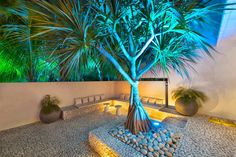 Architecture: Cool Home Design with Amazing Architecture in Key Biscayne, Florida, USA. Beautiful Garden with Illumination Effect Zen, Modern Tropical House, Grand Luxe, Garden Design, House Design, Modern Contemporary Homes, Key Biscayne, Modern Mansion, Tropical Landscaping