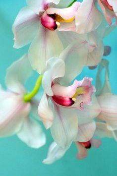 """janetmillslove: """" White Orchids moment love """""""