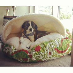 lola loves cuddling up in her snoozer bed to stay warm pet name lola cozy cave - Cozy Cave Dog Bed