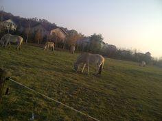www.horseland.ro