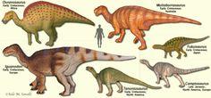 Iguanodontoids