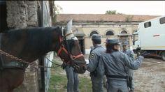 Un lager per cavalli. Allevamento sequestrato