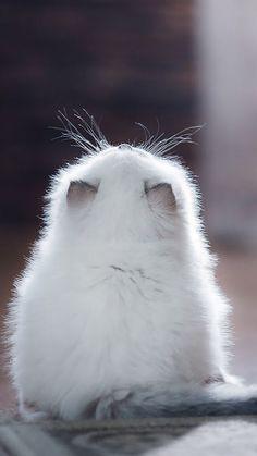 Waiting.. #cuteanimals #adorableanimals #love #cat #kitten