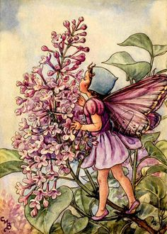 LILAC FAIRY - Cicely Mary Barker.  Art Print, Fabric Block, Heat Transfer or Waterslide Decal.  Size Options.