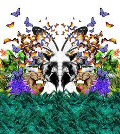 ElephantVoices Brasil: 07/19/13