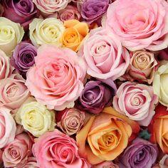 La Vie: Perfume das Flores - Rosas