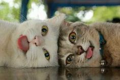 justcatposts:  Look at these two cuties #cute