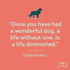 Here's @DogVacay's favorite dog quote of the week! #DogVacayQuotes