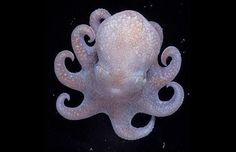 ... pictures of beautiful creatures that live very deep under the sea