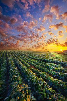 ~~Midsummer's Dream | sunset farm field landscape | by Phil Koch~~