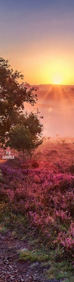 'The Posbank, The Veluwe - The Netherlands