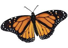 Resultado de imagen para mariposas Moth, Insects, Butterfly, Montessori, Board, Google, Paper Butterflies, Monarch Butterfly, Paintings