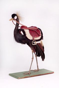 Influenced by both story-telling and natural history, Artist Kelly McCallum uses Victorian taxidermy as well as insects and precious metals to create her unusual and curious collection of sculptures. Her work explores themes of death, decadence, decay and rebirth.